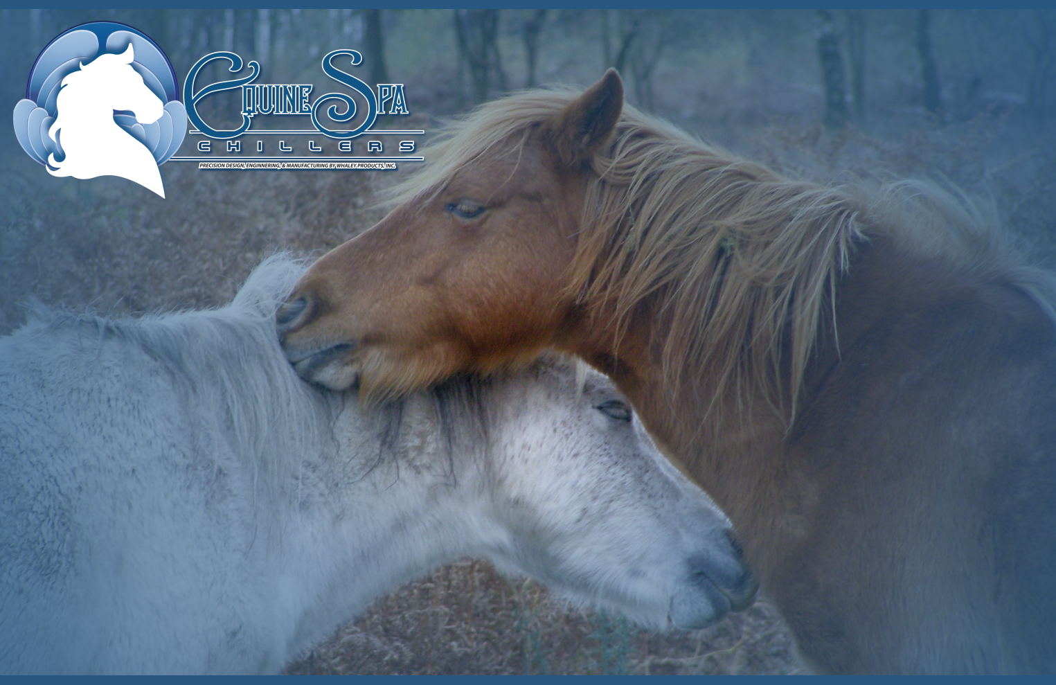 Equine physical therapy - Equine Physical Therapist School Regulations Are Established By The State One State May Require A Doctor S Veterinary Degree And Another State May Require